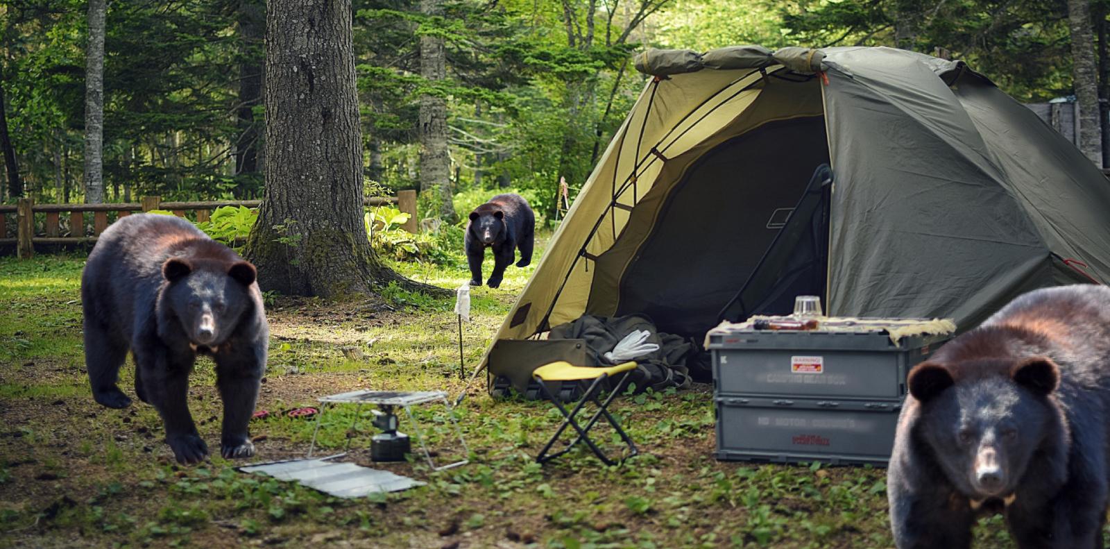 キャンプ場と熊の画像